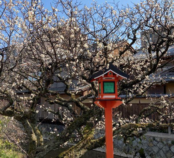 祇園白川の梅と鶯